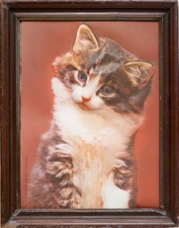 Reliefbild Kätzchen